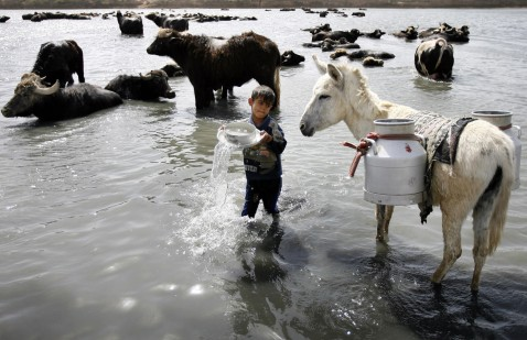 Baghdad, IRAQ: An Iraqi boy fills an urn with drinking water whilst a herd of buffaloes cool-off in the waters of the Diyala River east of Baghdad, 18 April 2007.