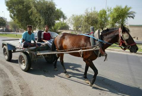 Iraqis laugh as they ride a horse-drawn cart in central Baghdad a day after an indefinite curfew on two-wheelers and hand carts was imposed, 26 August 2007.